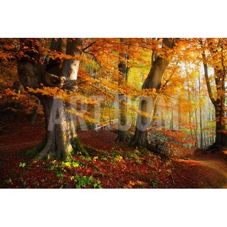 Landscape Nice Fantasy Forest with Creek in a Golden Autumn. Wall-Poster Idea. Print Wall Art By S - Autumn Decorating Ideas