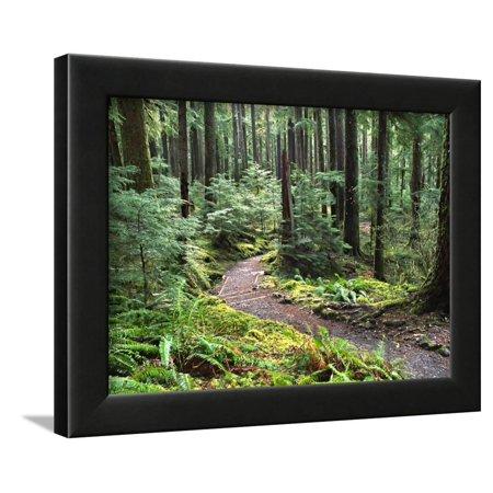 Trail to Soleduc Falls, Olympic National Park, Washington, USA Framed Print Wall Art By Charles Sleicher