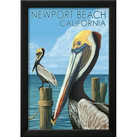 Newport Beach, California - Brown Pelican Framed Art Print Wall Art ...