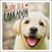 Love Is A Labrador : A lab-tastic celebration of the world's favourite dog