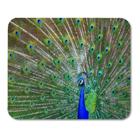 POGLIP Blue Bold Male Peacock Spreading Feathers Green Nature Mousepad Mouse Pad Mouse Mat 9x10 inch - image 1 de 1