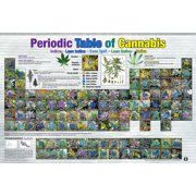 Periodic Table Of Cannabis Marijuana Pot Reference Chart Poster 36x24 inch