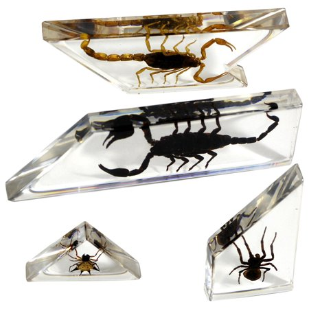 Scorpion   Spider Tangram Puzzle  4 Piece   Clear  One Size  Usa  Brand Realbug