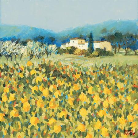 Lemon Grove, Tuscany Italian Country Farm Landscape Painting Print Wall Art By Hazel Barker