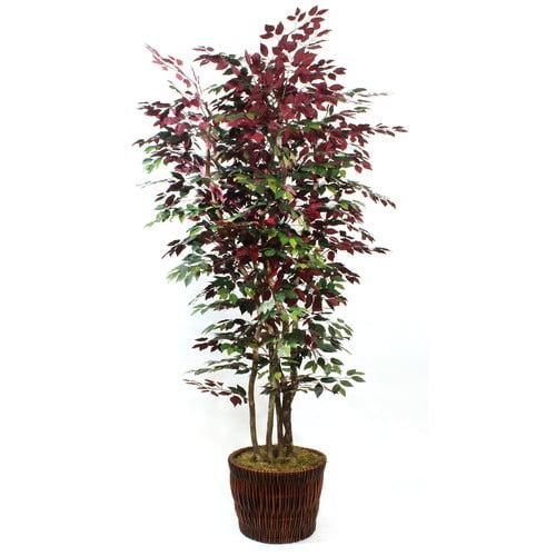 DalMarko Burgundy Ficus Tree in Basket