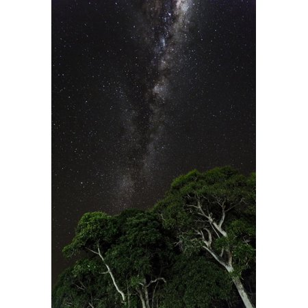 Light painted tree in the foreground with the Milky Way Galaxy in the Pantanal, Brazil Print Wall Art By James White