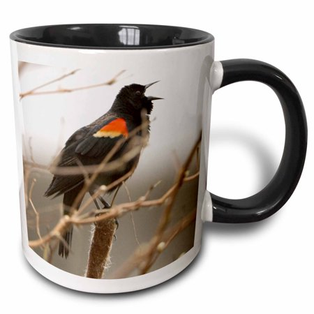3dRose Red-winged blackbird, Stanley Park, British Columbia-CN02 PCL0129 - Paul Colangelo - Two Tone Black Mug, 11-ounce - Stanley Park Halloween