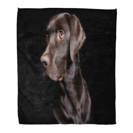 ASHLEIGH Flannel Throw Blanket Brown Dog Low Key of Chocolate Lab on Black Soft for Bed Sofa and Couch 58x80 (Colors That Go With Chocolate Brown Sofa)