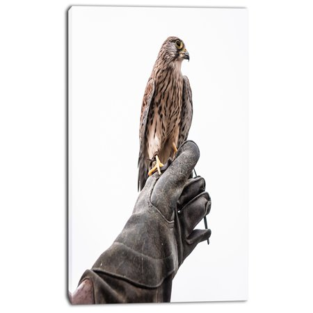 Kestrel Sitting on Falconer Hand - Abstract Canvas Art Print - image 2 of 3