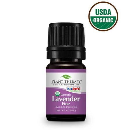 Plant Therapy Lavender Fine Organic Essential Oil 5 Ml  1 6 Fl  Oz   100  Pure  Undiluted  Therapeutic Grade