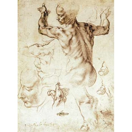 Anatomy Sketches   Libyan Sibyl Poster Print By Michelangelo