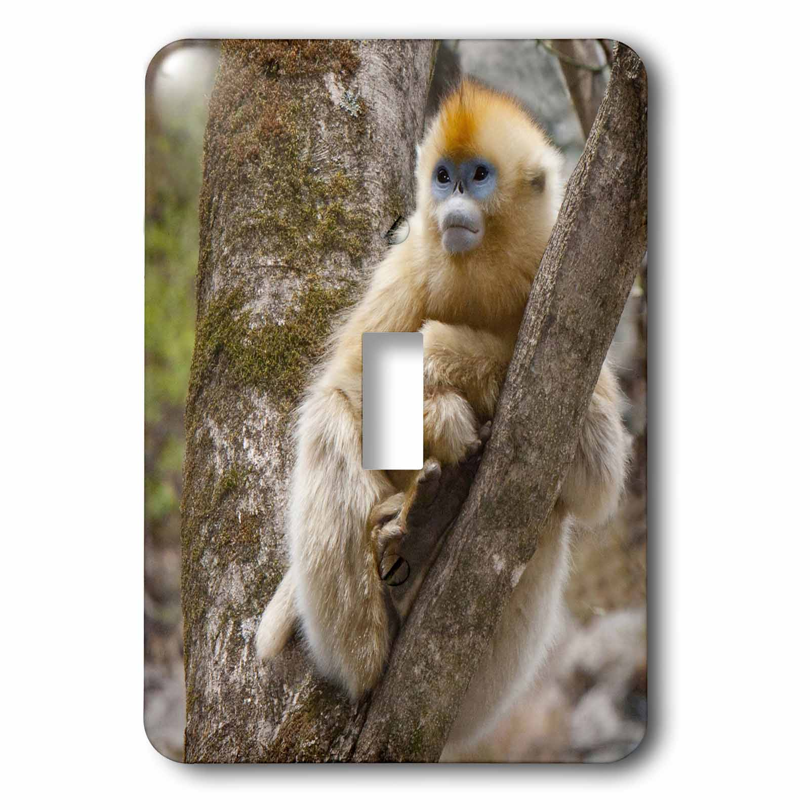 3dRose China, Qinling Mountains, female Golden monkey - AS07 AGA0019 - Alice Garland, 2 Plug Outlet Cover