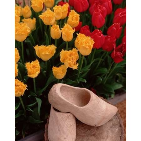Wooden Shoe Tulips Poster Print by Ike Leahy ()