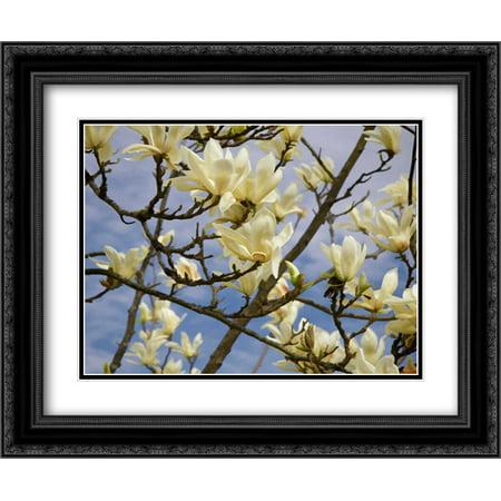 Tulip Treer 2x Matted 24x20 Black Ornate Framed Art Print by Johnson, George