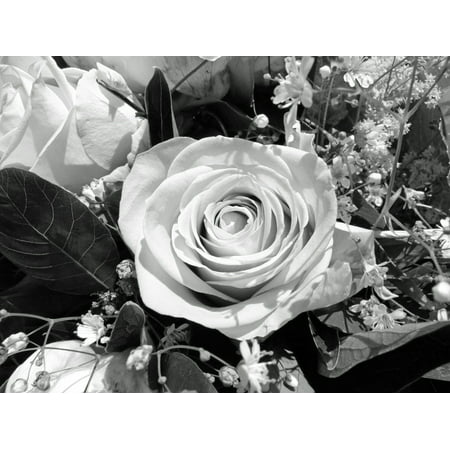 Peel n stick poster of black and white flower rose poster for Rose adesive
