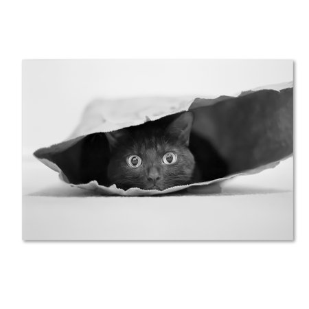 - Trademark Fine Art 'Cat In A Bag' Canvas Art by Jeremy Holthuysen