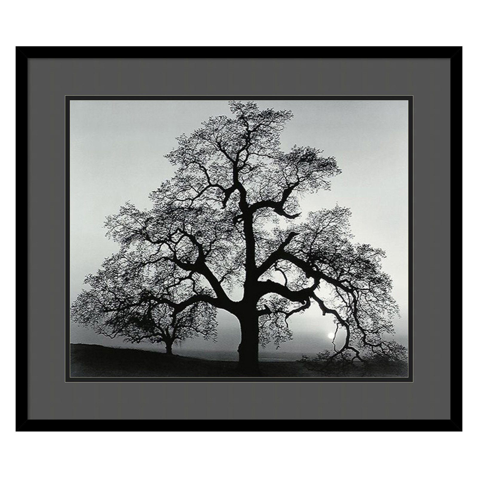 Oak Tree, Sunset City, California, 1962 Framed Wall Art by Ansel Adams