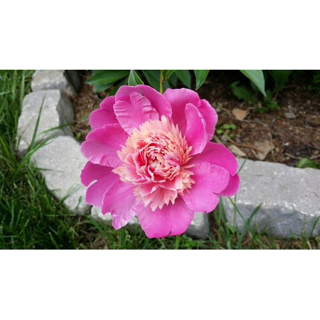 Pretty Petals Scented Flower - LAMINATED POSTER Flower Nature Colorful Pretty Pink Petals Bloom Poster Print 24 x 36