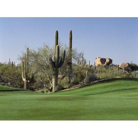 Saguaro Cacti in a Golf Course, Troon North Golf Club, Scottsdale, Maricopa County, Arizona, USA Print Wall Art