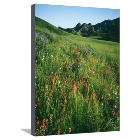 Malibu Creek State Park Stretched Canvas Print Wall Art By James