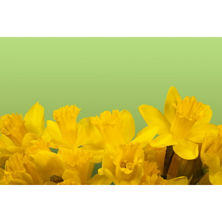 Framed Art for Your Wall Easter Blossom Bloom Spring Yellow Daffodil 10x13 Frame