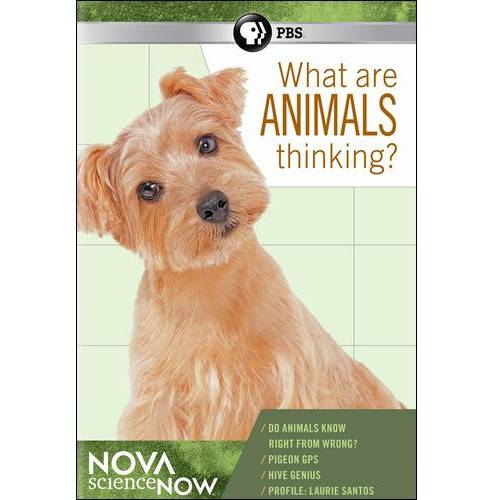 NOVA ScienceNOW: What Are Animals Thinking?