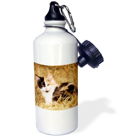 3dRose Longhair calico kitten in golden grass - NA02 PWO0136 - PiperAnne Worcester, Sports Water Bottle, 21oz