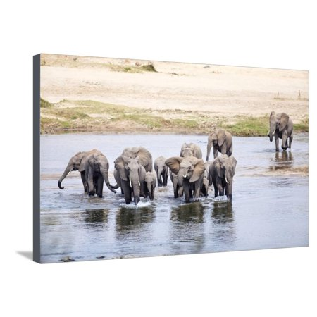 Elephant in Olifants River, South Africa Stretched Canvas Print Wall Art By Richard Du Toit ()