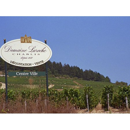 Sign for Domaine Laroche and the Les Clos Grand Cru Vineyard, Chablis, France Print Wall Art By Per Karlsson Alsace Grand Cru Vineyards