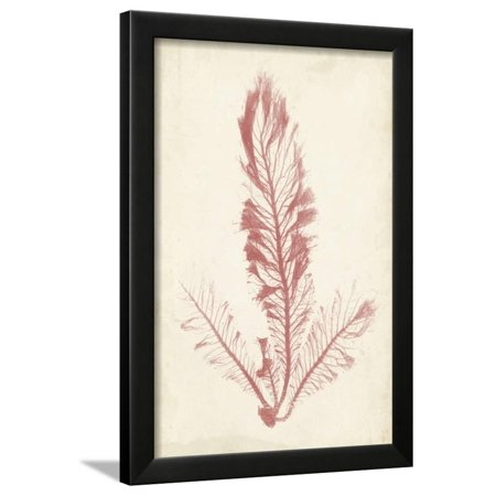 Coral Sea Feather I Framed Print Wall Art By Henry Bradbury (Art Com Feather Print)