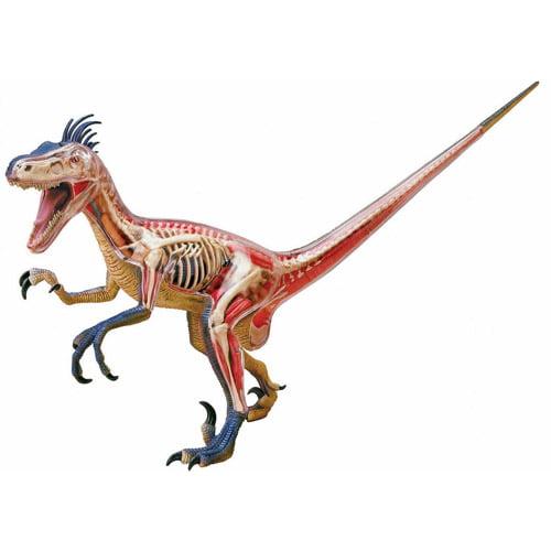4D Velociraptor Anatomy Model