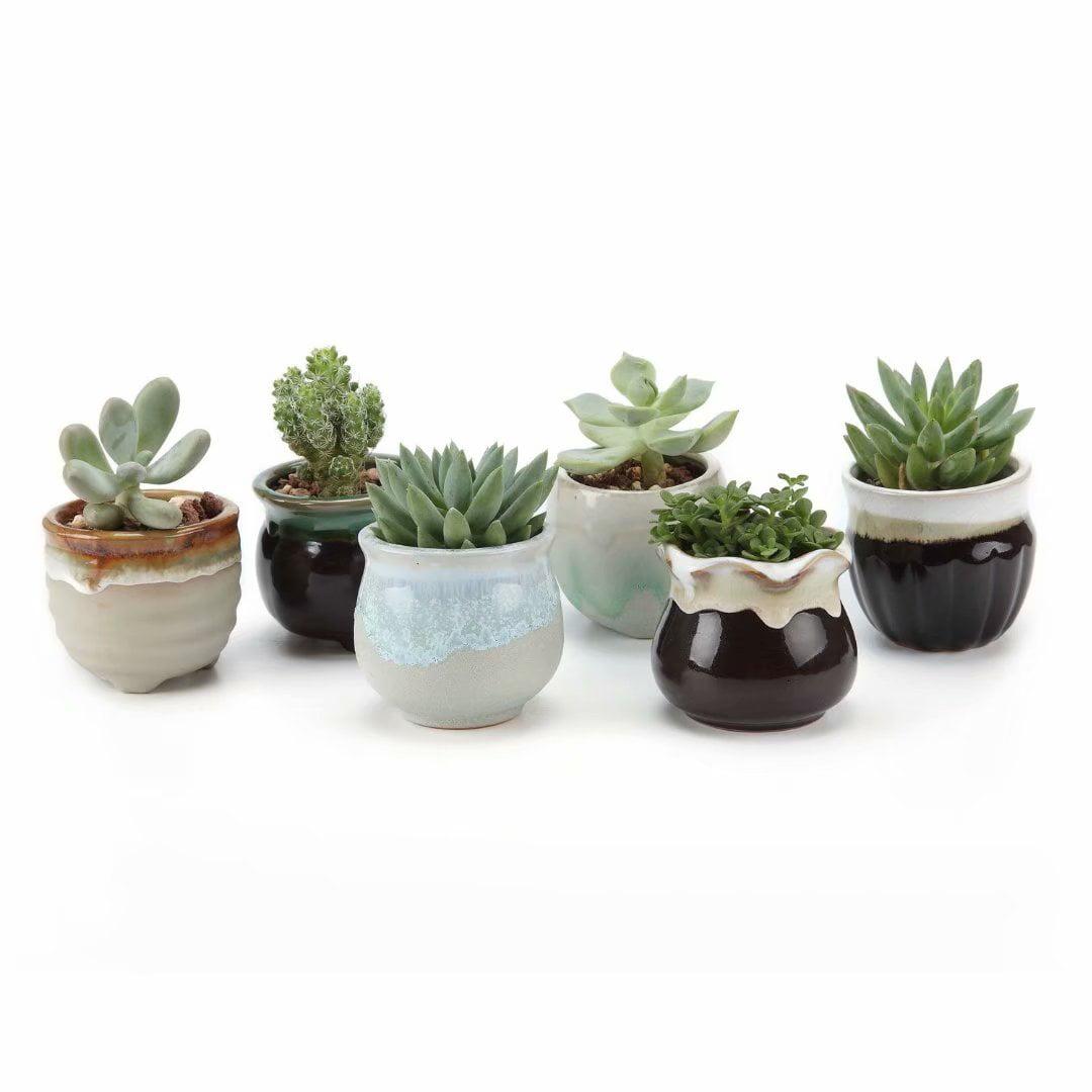 Small Ceramic Succulent Pots With Drainage Set Of 6 Mini Pots For Plants Tiny Porcelain Planter Air Plant Flower Pots Cactus Faux Plants Containers Modern Decor For Home And Office Walmart Com