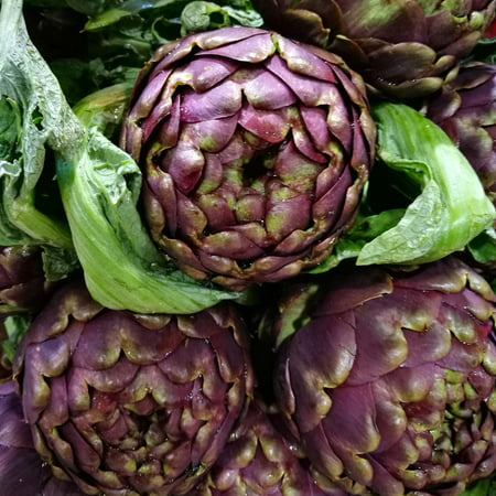 Purple Italian Globe Artichoke Seeds - 0.25 Oz - Non-GMO, Heirloom Vegetable Garden Seeds - Cynara scolymus