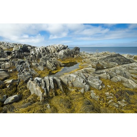 Shoreline Along The Bay Of Fundy Near Pubnico Nova Scotia Canada Poster Print By Dave Reede  Design Pics