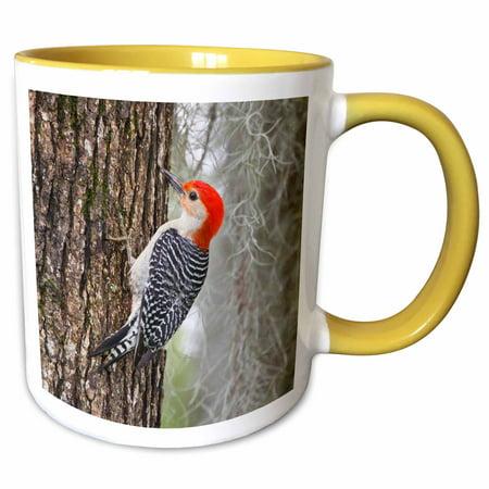 3dRose Red-bellied Woodpecker bird, male on Oak Tree - US44 LDI0528 - Larry Ditto - Two Tone Yellow Mug,