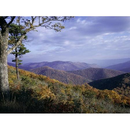 Area Near Loft Mountain, Shenandoah National Park, Virginia, USA Print Wall Art By James Green Shenandoah National Park Map