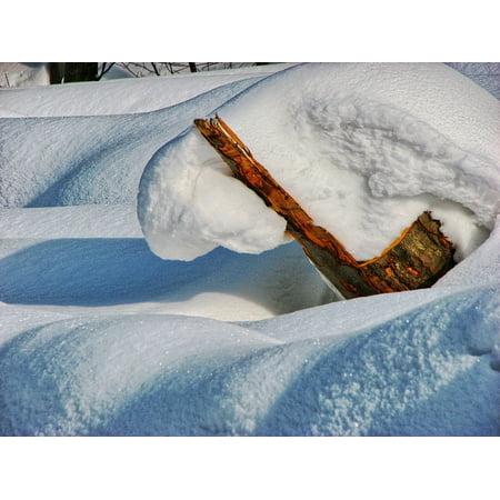 Canvas Print Biel Forest Trunk Winter Snow Zaspa Stretched Canvas 10 x 14 ()