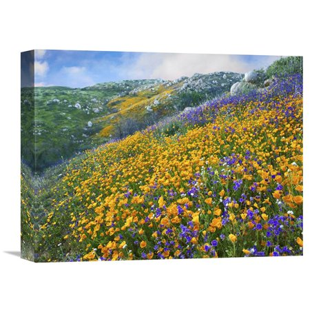 Global Gallery California Poppy and Desert Bluebell Flowers Canyon Hills Santa Ana Mountains California Wall (Desert Hills California)