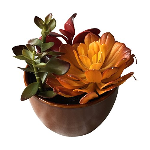 """Set of 2 - 6""""Ceramic Potted Artificial Faux Succulent Plants - AIHY3010(NOT TINY 3"""" PLANTS)"""