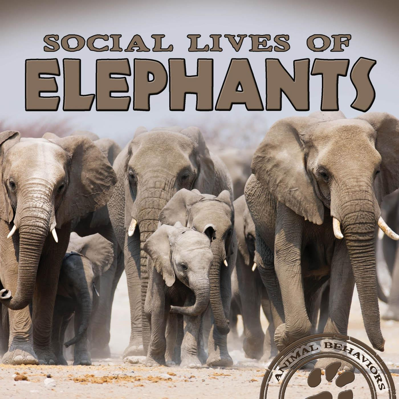 Social Lives of Elephants