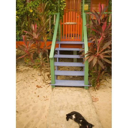 Cat Sleeping By Entrance, Placencia, Stann Creek District, Belize Print Wall Art By John & Lisa Merrill