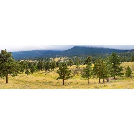 Trees on landscape along Trail Ridge Road Estes Park Rocky Mountain National Park Colorado USA Poster Print by Panoramic Images - Halloween Park Ridge