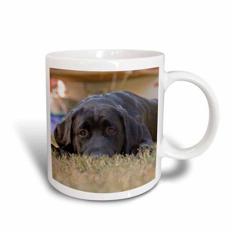 3dRose Labrador Retriever puppy dog - NA02 RBR0015 - Rick A. Brown, Ceramic Mug,