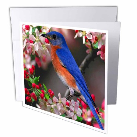 3drose bluebird and hummingbird with a harp in the snow greeting 3drose beautiful bluebird n cherry blossoms greeting cards 6 x 6 inches set m4hsunfo
