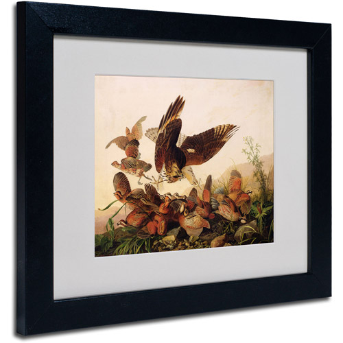 "Trademark Fine Art ""Red-Shouldered Hawk"" Canvas Art by John James Audubon, Black Frame"