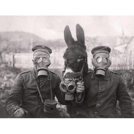 Laminated Poster World War 1 Donkey Soldier Gas Mask Glossy Poster Banner Wwi Poster Print 11 x (Best Gas Mask In The World)