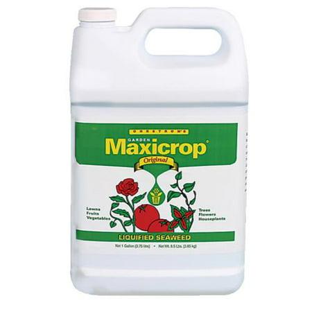 Maxicrop Original Liquid Seaweed Gallon (Liquid Seaweed)