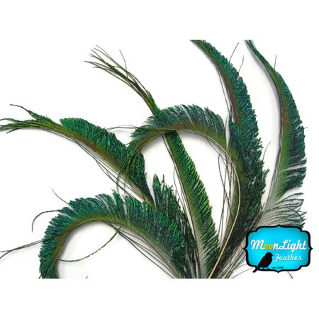 50 Pieces - Natural Peacock Swords Cut Wholesale Feathers - Bulk Feathers