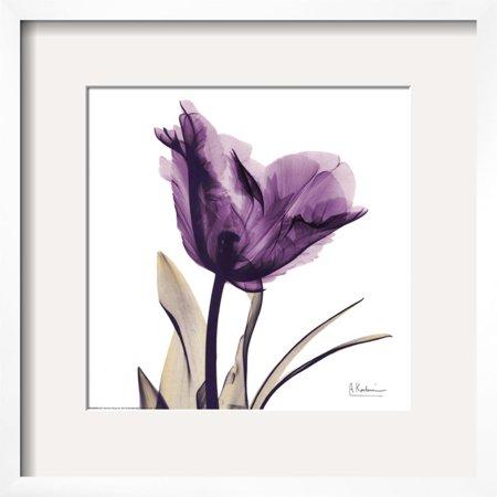 Royal Purple Parrot Tulip Framed Art Print Wall Art  By Albert Koetsier - 18x18