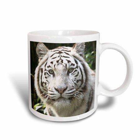 3dRose White Tiger, Ceramic Mug,